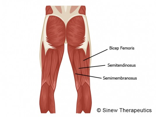All Hands on Fitness: How Bigger Hamstrings Will Improve ...