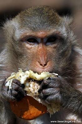 funny_picture_funny_monkey_eating_burger_vandanasanju.blogspot.com