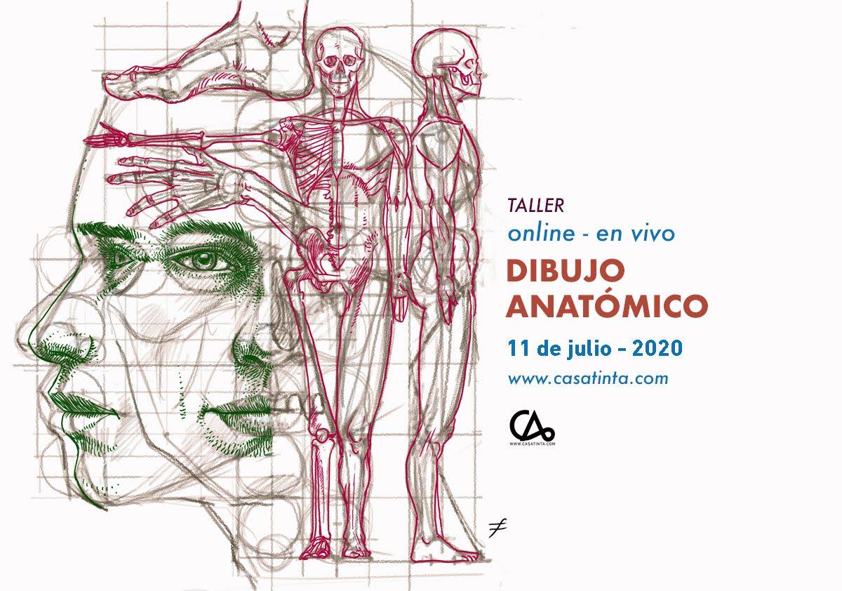 DIBUJO ANATÓMICO // 11 de jul