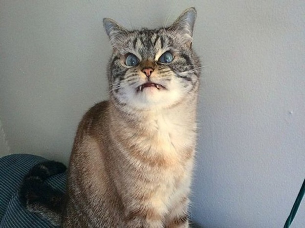 Kucing Puntianak