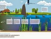 Infographic waterplanten. Sturen op watervegetaties. Bron: www.helpdeskwater.nl