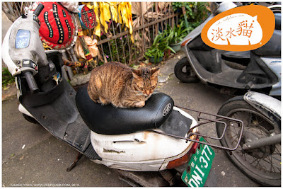 Vedfolnir Cat 在淡水古老巷弄中午睡的貓咪們