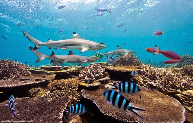 http://funkidos.com/pictures-world/wild-life/stunning-underwater-photography-by-alexander-safonov