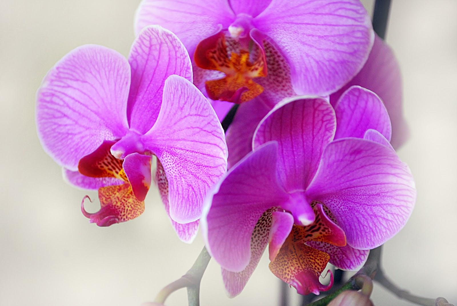 7 Kwiatow Pielegnacja Storczyka To Naprawde Latwe