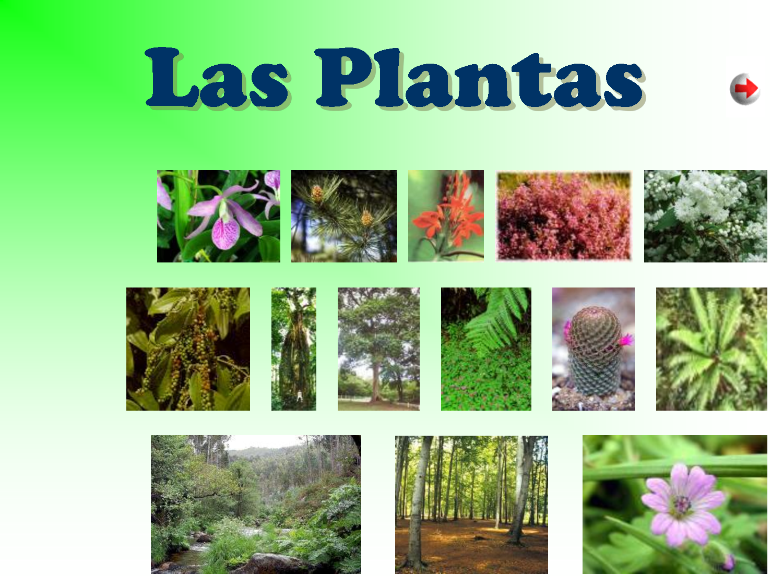 Mi aula bogado las plantas 2 for Que son plantas ornamentales ejemplos