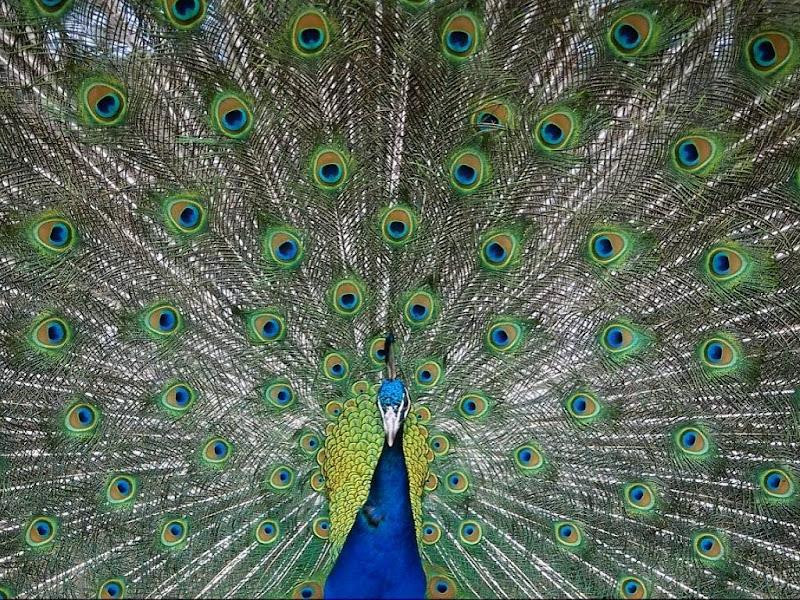 Imágenes del mundo animal title=