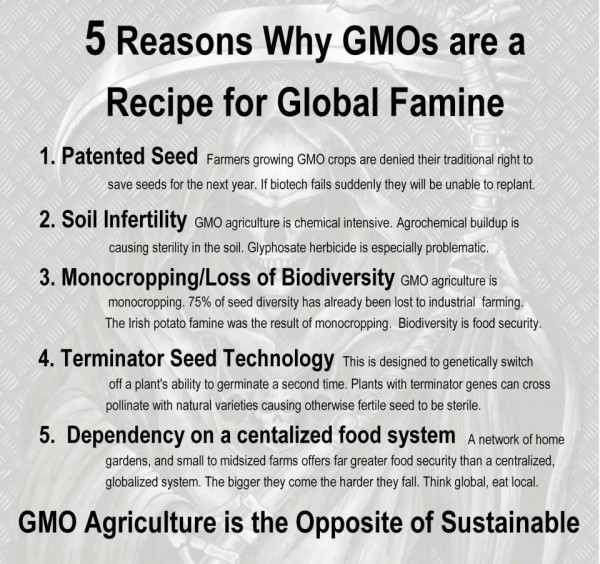 5 Reasons Why GMOs are Recipe for Global Famine