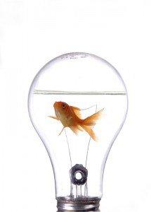 Negocios innovadores
