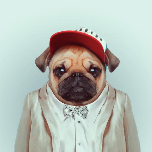 Pets new Fashion