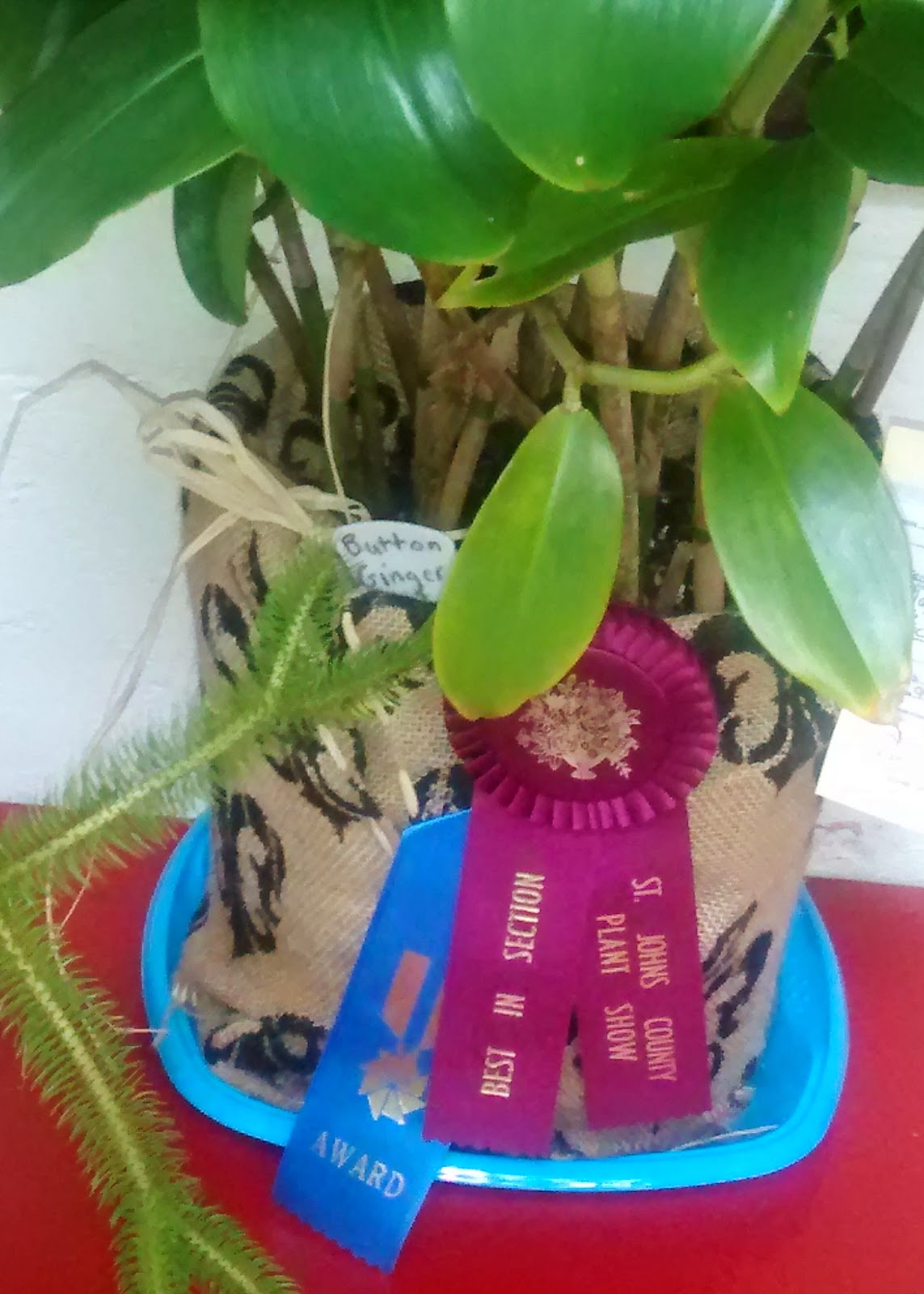 SFI Plants - with Gardener Jill Ziebell's Hard Work - Win Ribbons at Home and Garden Show 22  IMG 20141007 164738127 St. Francis Inn St. Augustine Bed and Breakfast