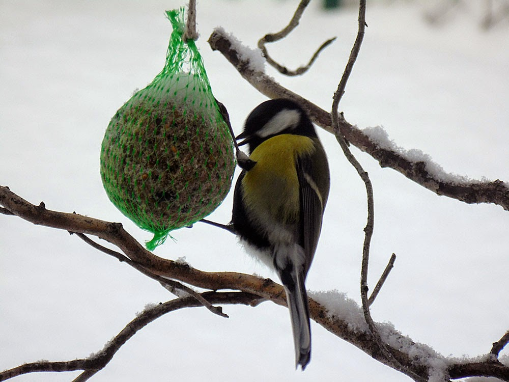 photos of Winter garden birds  by Andie Gilmour
