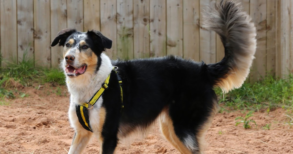 Dogs Trust Loughborough: The great rehoming mystery!