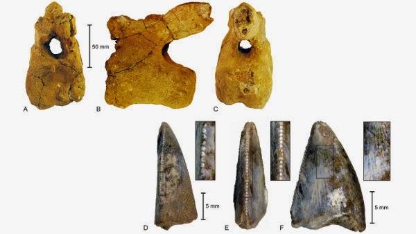 fosil dinosaurus arab saudi