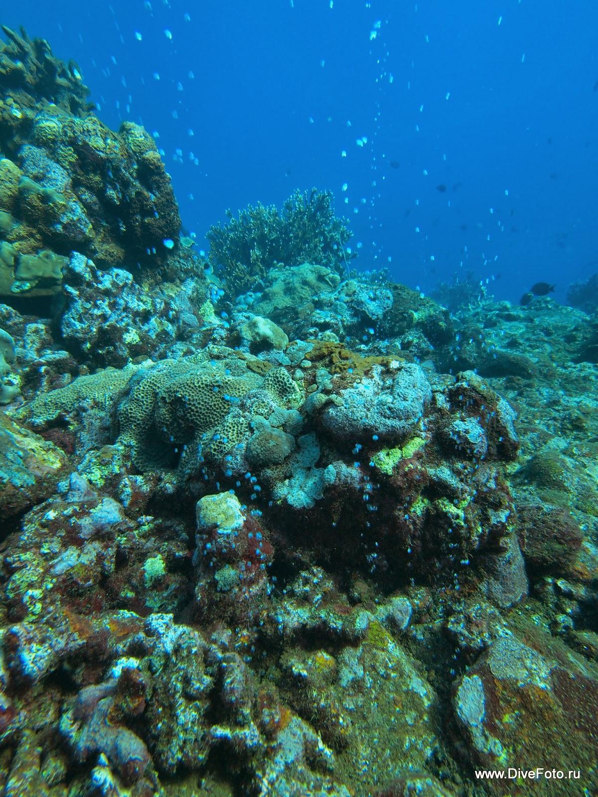 Вулканические пузырьки со дна моря