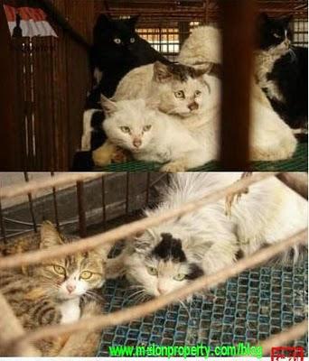 300 Kucing Gagal di Jadikan Sup di Restoran