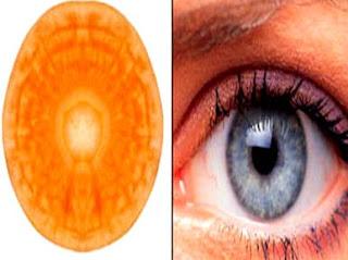 carrot for eyes