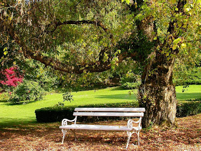 white park bench under beautiful huge tree in early autumn