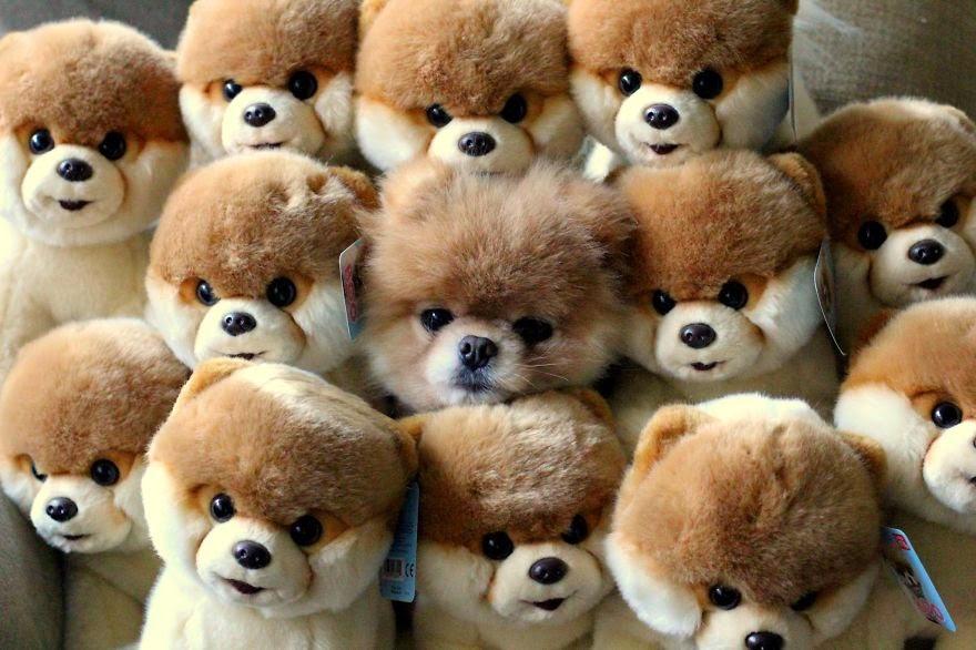 mascotas maestras del camuflaje