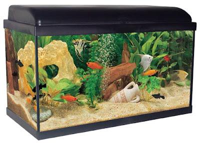 vous propose une sélection d'aquariums adaptés à vos besoins, quel que soit votre niveau d'aquariophilie.
