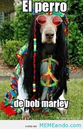 cachorro engraçado do bob marley