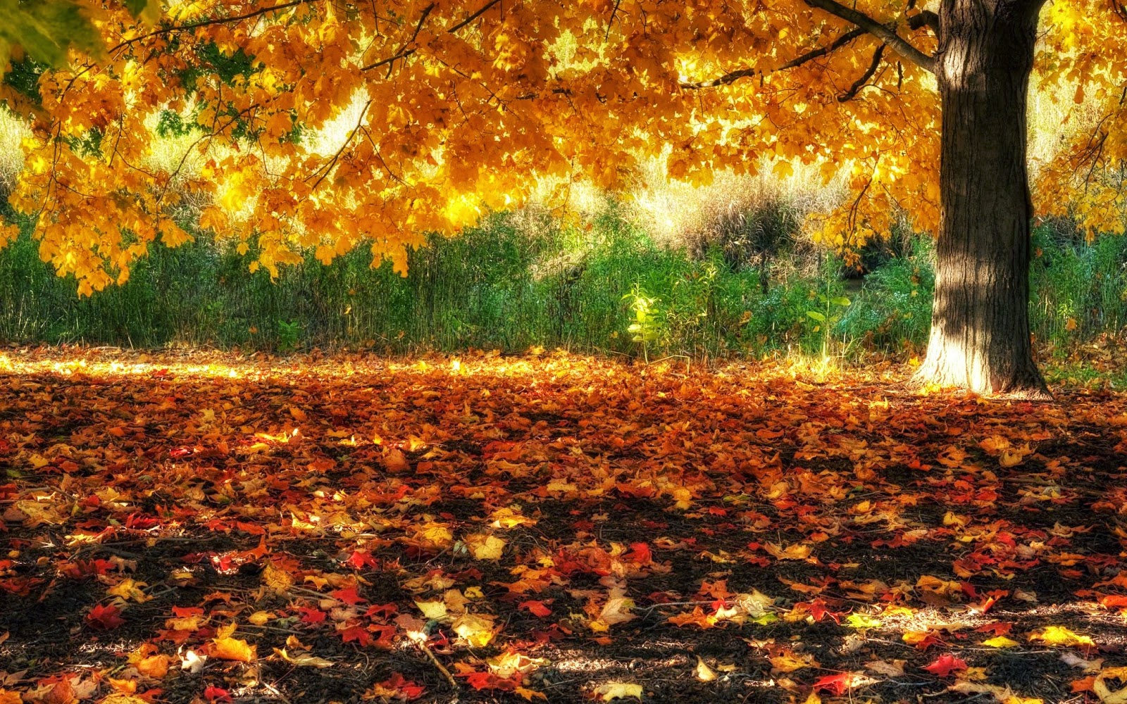 Beautiful Autumn Trees Wallpapers Http Refreshrose