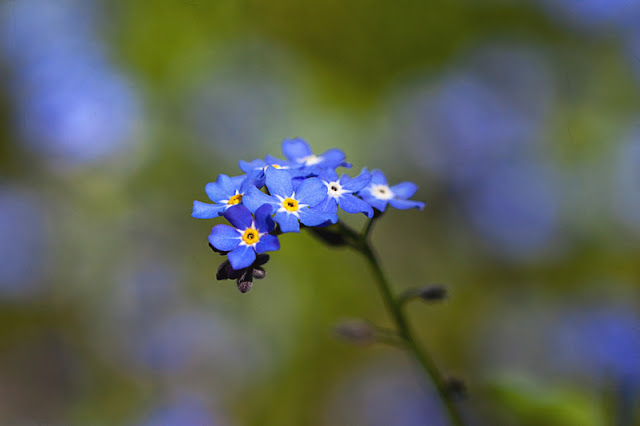 blue flower with green and blue bokeh