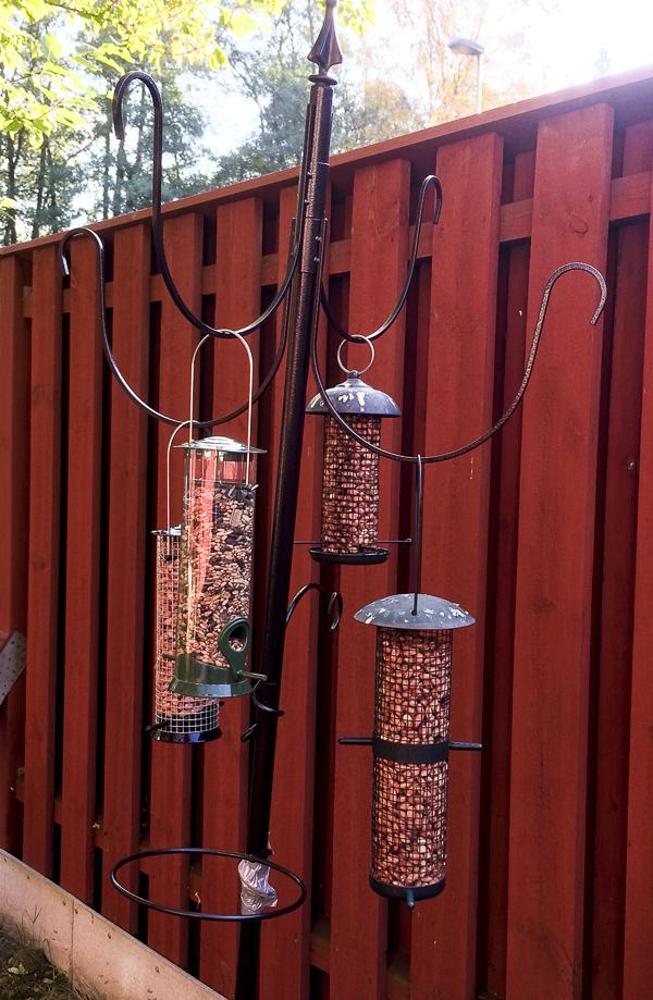 fågelmatsautomat