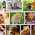 Mascotas sanas para familias felices