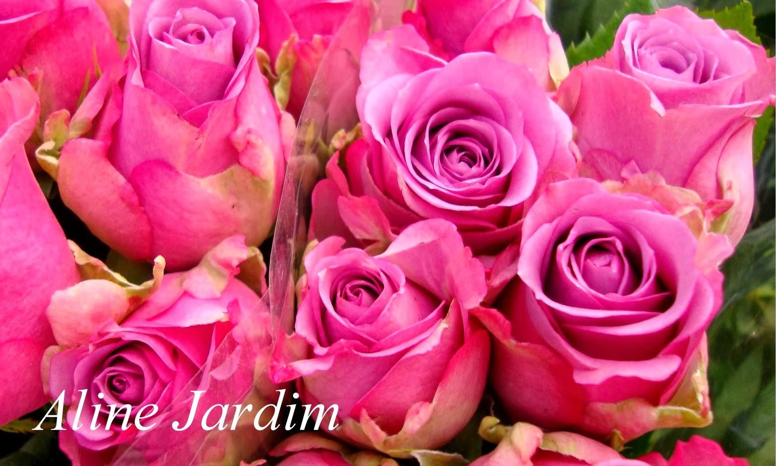 Aline Jardim