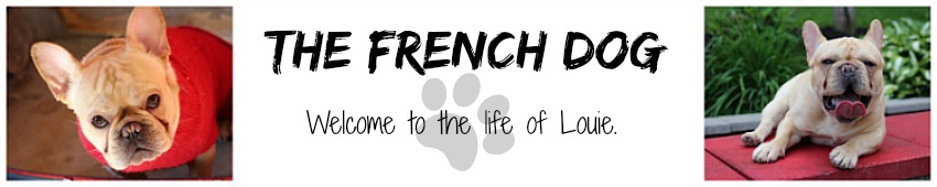 The French Dog