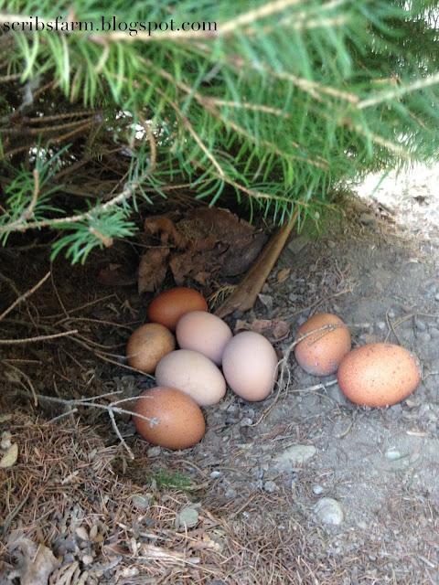 free range nest