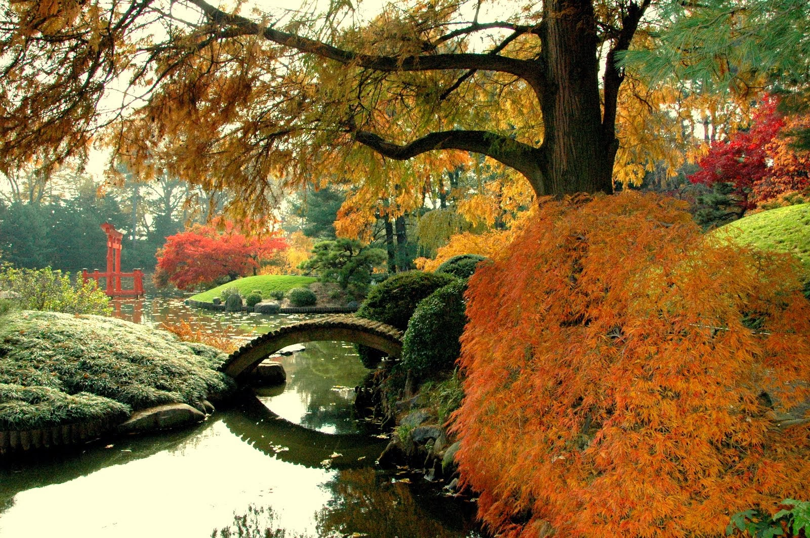 Brooklyn Botanic Garden, Japanese Hill and Pond Garden