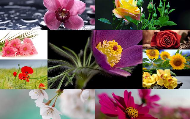 Hermosas Fotos de Flores - Imágenes de Flores en HD