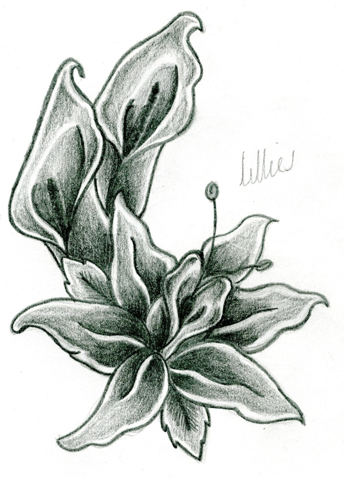 Gallery For gt Pencil Shading Flowers