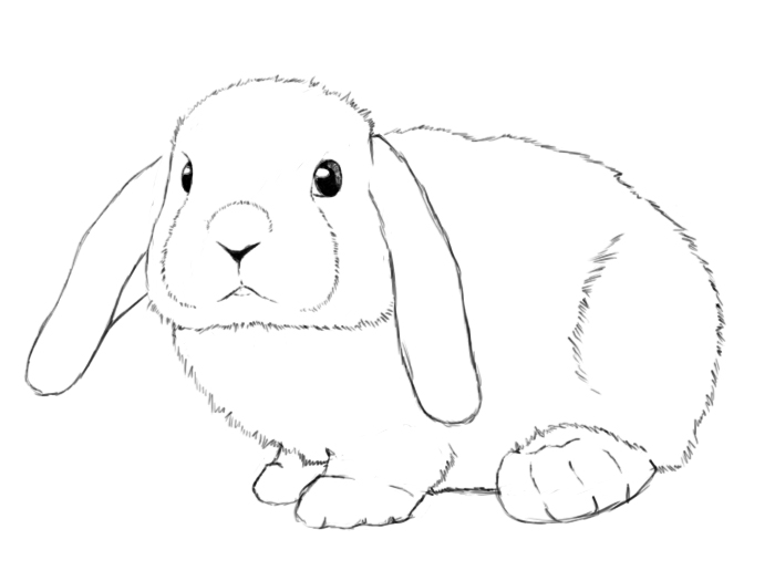 by now you have a fully drawn bunny congrats as you can see in the image on the right all that is left to do is color in the rabbits eyes