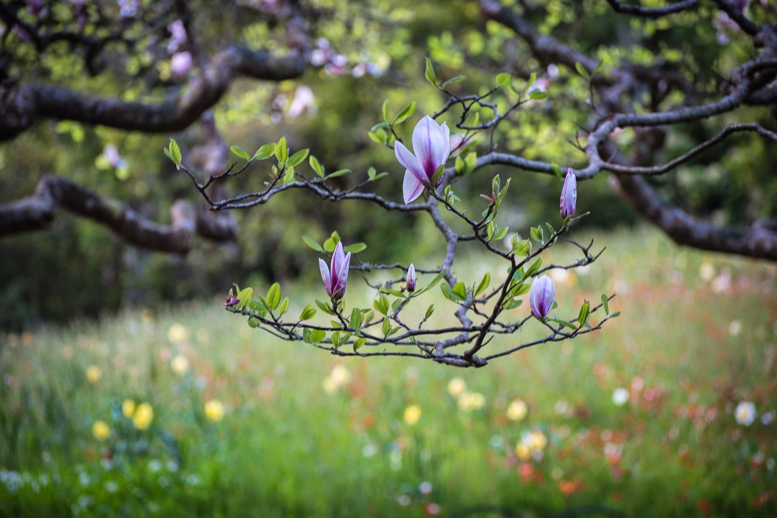 magnolia wellington gardens