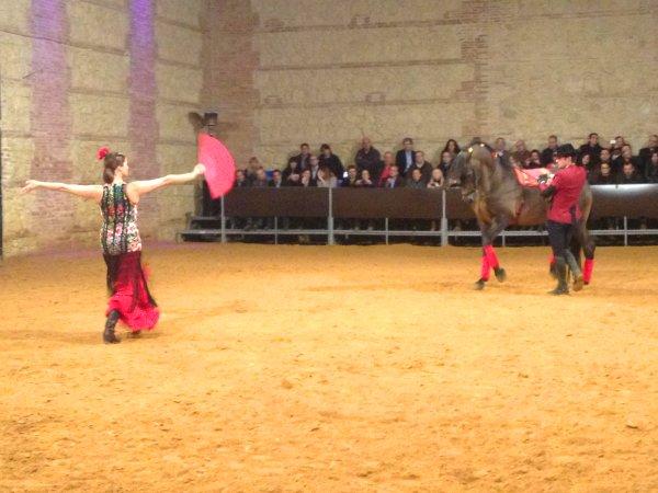 Espectáculo Ecuestre en Córdoba