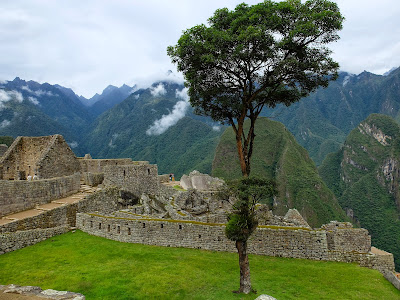 Erythrinia tree at Machu Picchu