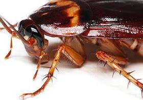 Se Ekor Kecoa Pun Sangat Berjasa Bagi Lingkungan dan Bumi