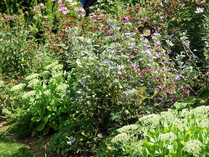 Les pins noirs qui dit que les jardins s 39 essoufflent for Le jardin qui dit non