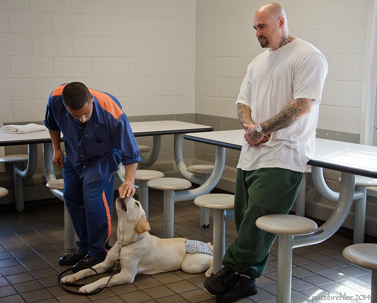A man dressed in the prison blue uniform is leaning over a yellow lab, placing a treat in her mouth. The lab is lying on the tile floor, her leash is draped across her front legs. She is wearing panties because she is in heat. A second man is leaning against a lunch table with his hands crossed  at his waist. He is bald with tatoos on his foreamrs, he is wearing green prison pants and a white t-shirt.