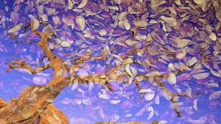 11 Arvore_despida_ sobre texturas de folhas_Iluminar_255