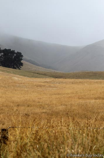Brown pasture on a rainy day, Te Aute Trust Rd, Te Aute, Central Hawke's Bay photograph