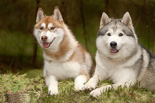 All List Of Different Dogs Breeds: Beautiful Dog Breeds