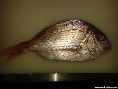 Renkodai fish
