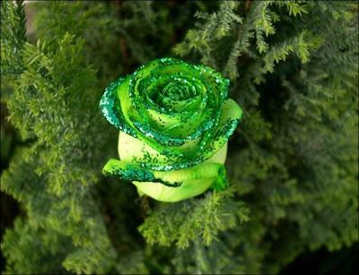 Gorgeous green rose flower