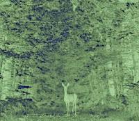 TOUT sur la forêt de Sénart et le statut de FORET DE PROTECTION