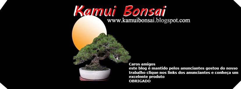 kamui bonsai