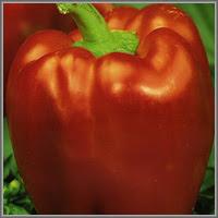 Сладкий перец сорт «Ред Барон»
