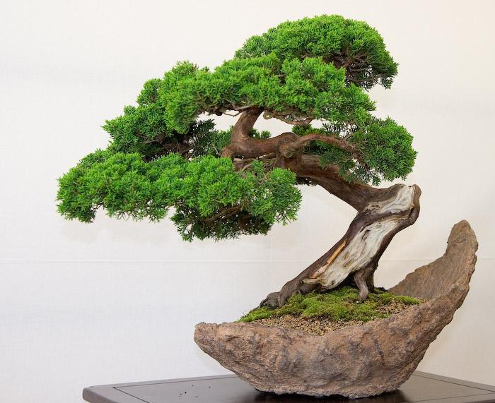 Hoe maak je zelf je eigen bonsai?